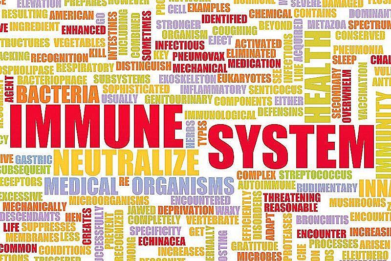 Что такое иммуномодулятор